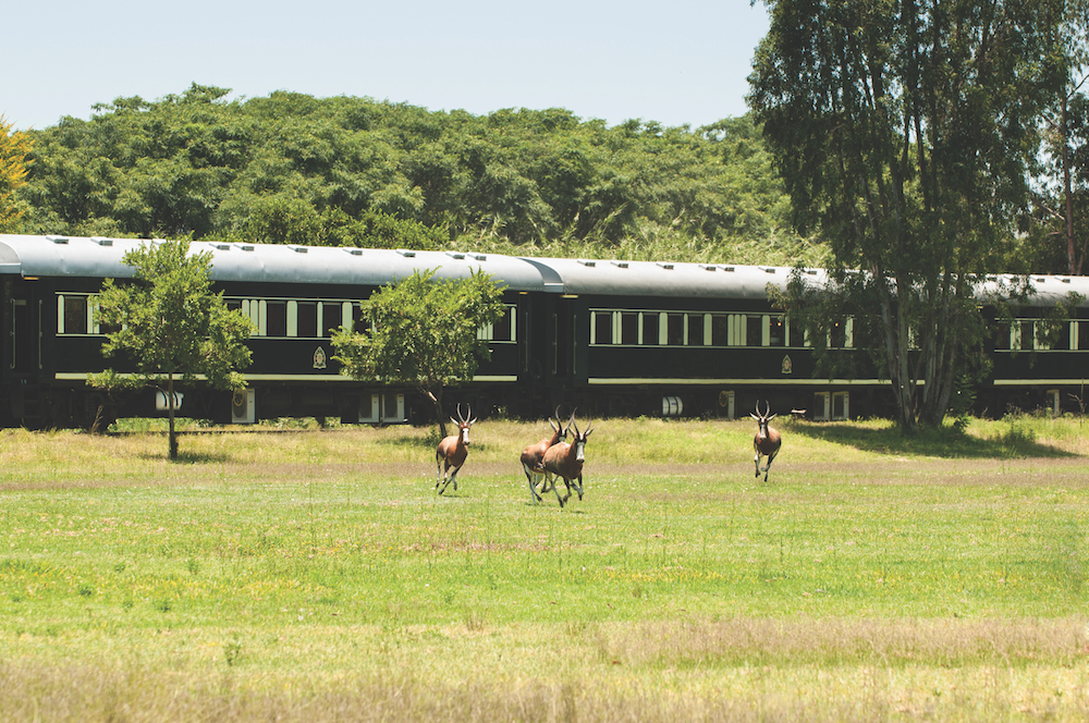 Rovos Rail and wildlife