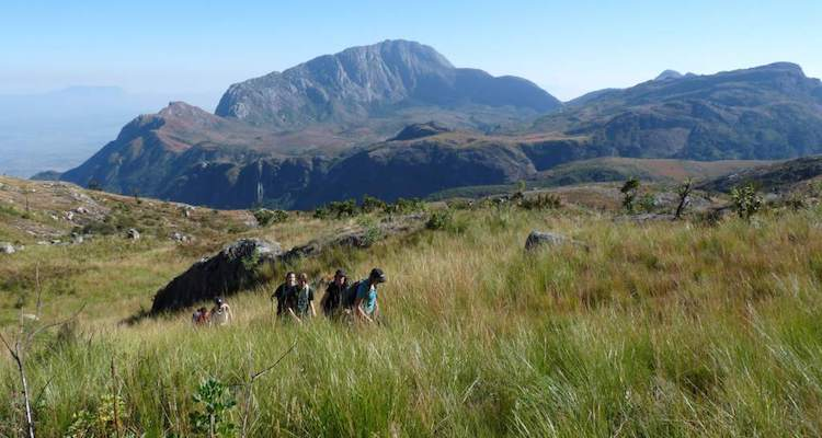 mount mulanje, souther africa
