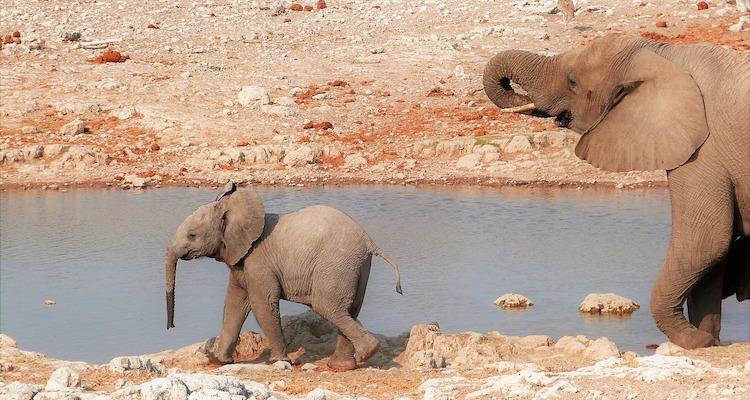 elephant, namibia, southern africa