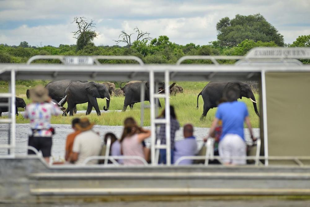 zambezi queen game viewing