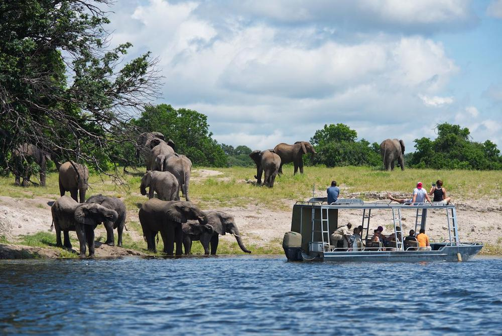 game viewing chobe