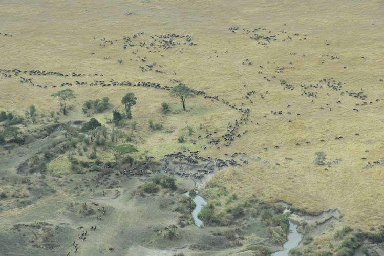migration, tanzania