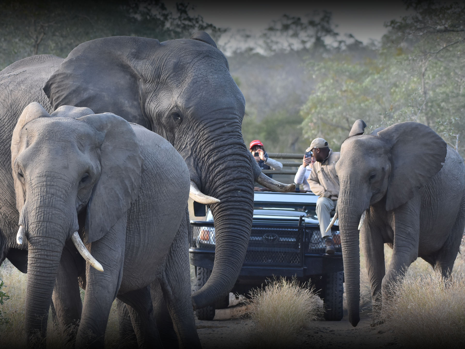 Bespoke safaris to Africa