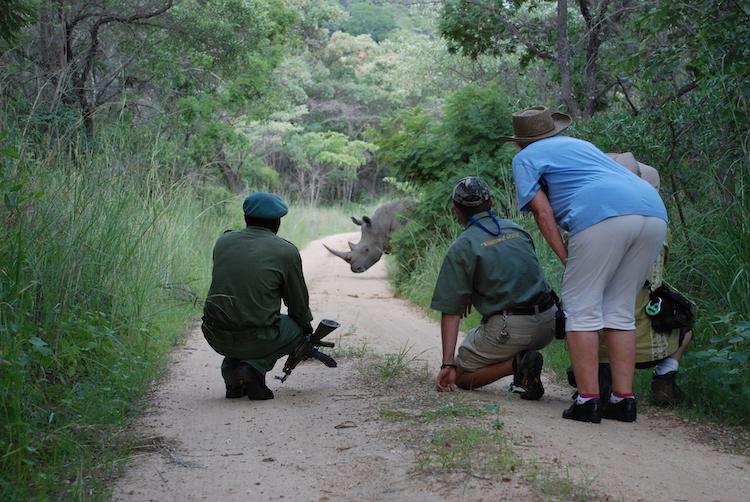 rhino, matobo hills