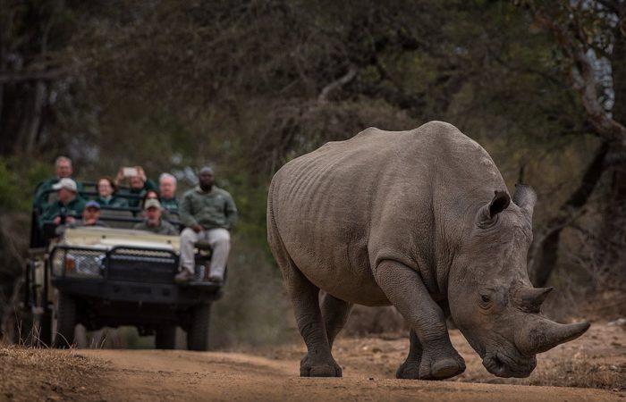 southern africa safari tour