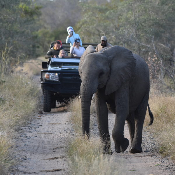 Multigenerational vacation to south africa