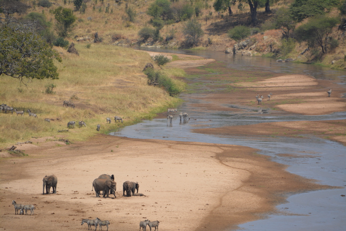 zimbabwe safari park