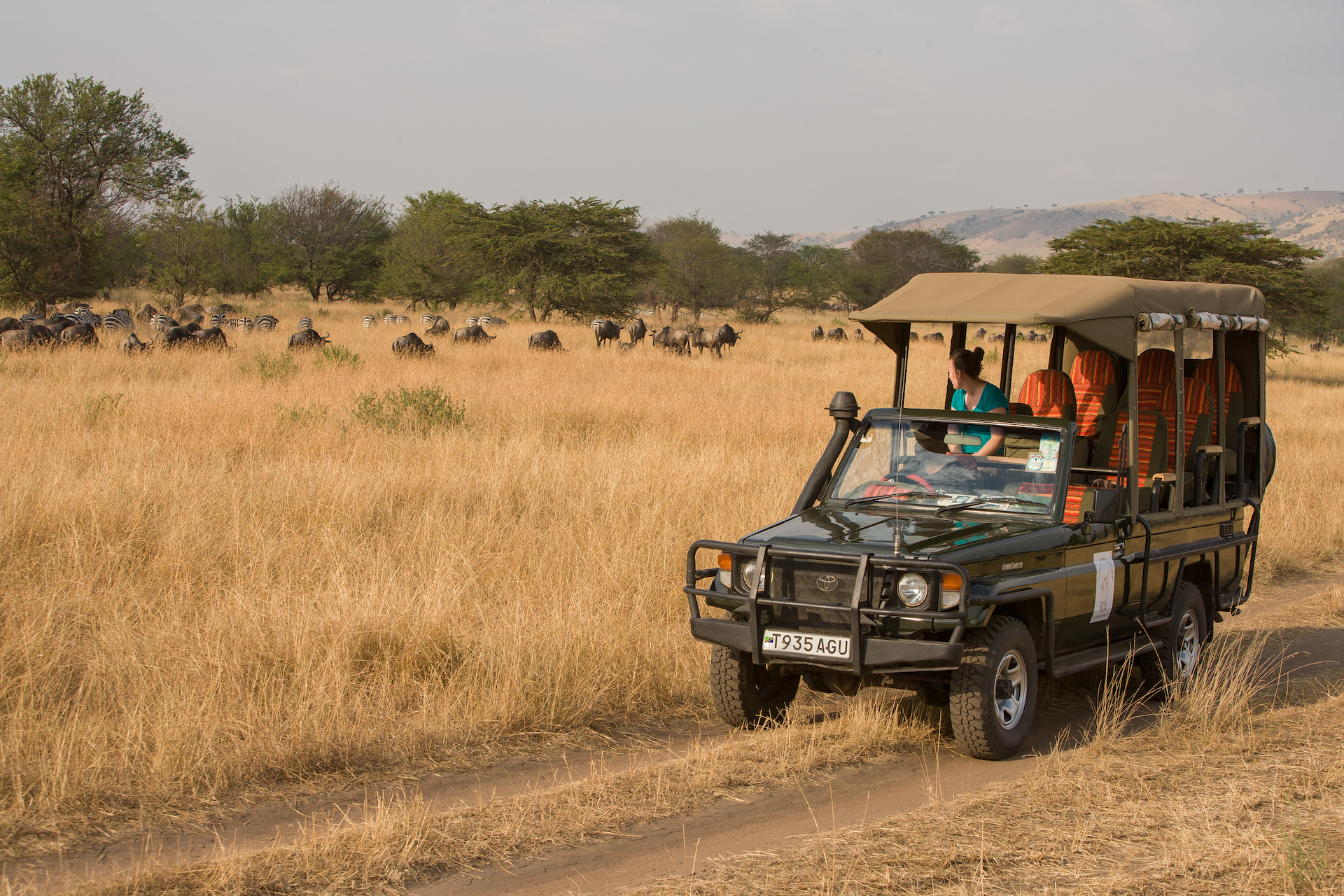 game drive, serengeti