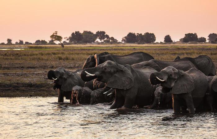 chirundu-fishing-trip-zambia