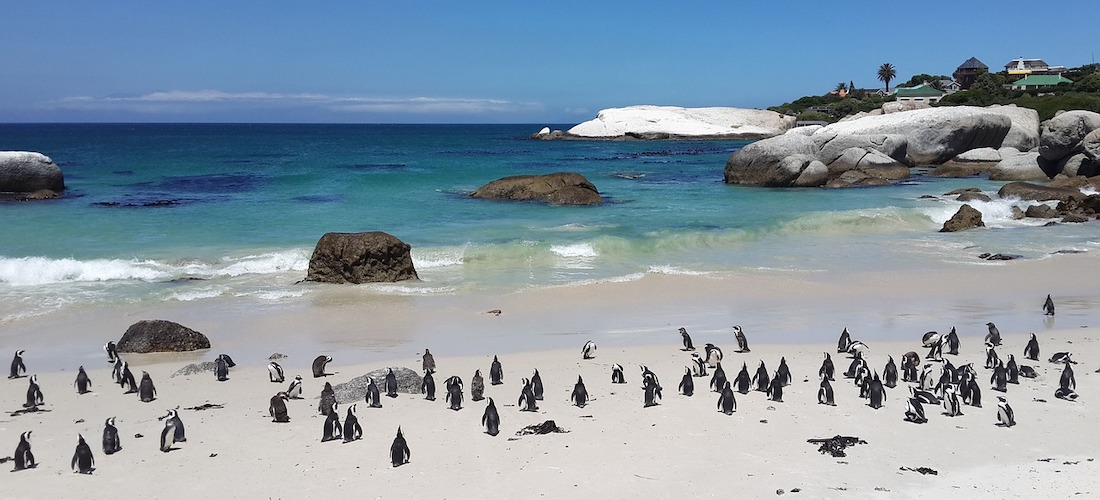 Boulders Beach, Penguins