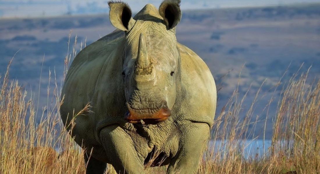 Game Walk Rhino, kwa-zulu natal battlefield