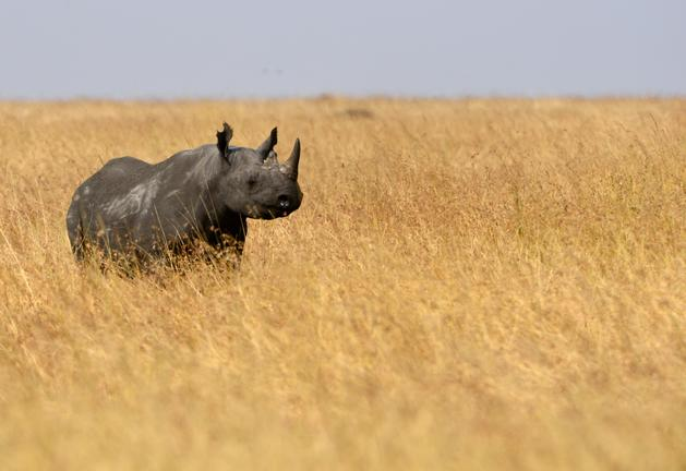 rhino serengeti