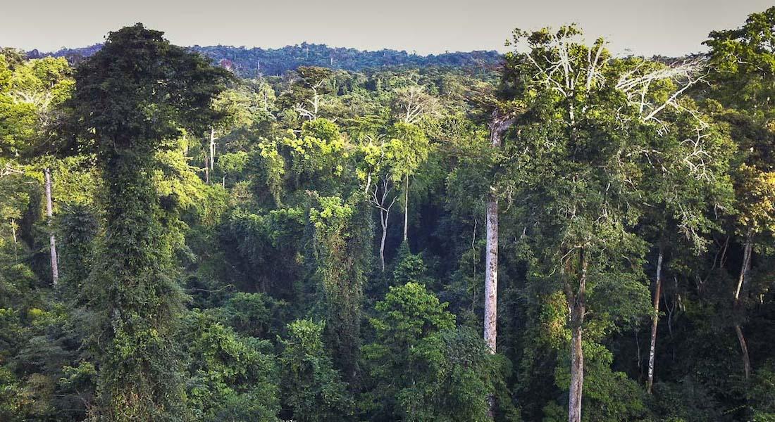 Canopy Walkway Kakum National Park