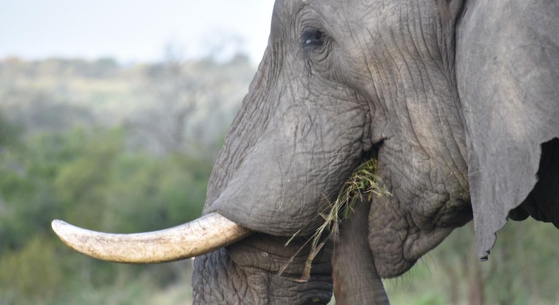 elephant in tanzania national park