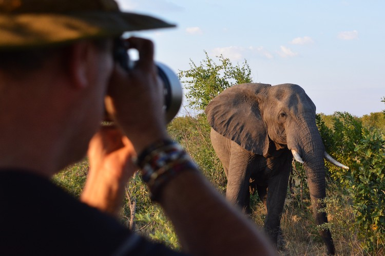 Robin photographing an elephant