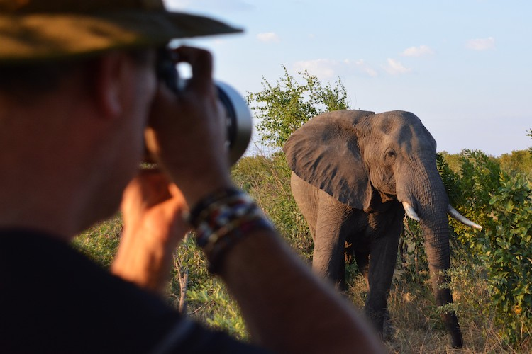 photographing an elephant