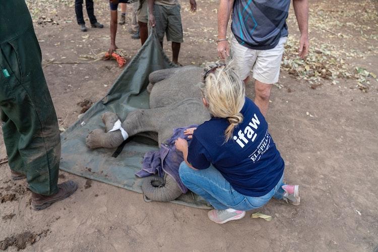 Elephant conservation in Zimbabwe