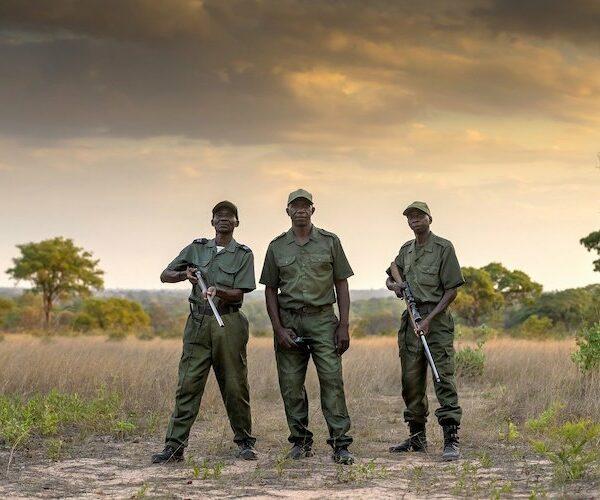 wildlife conservation zimbabwe