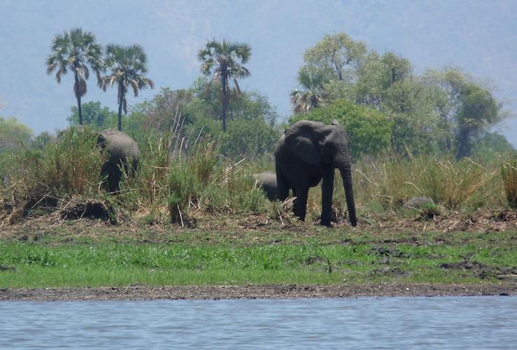 boat safari liwonde national park, malawi