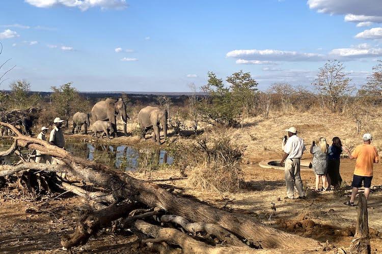 elephants victoria falls zimbabwe