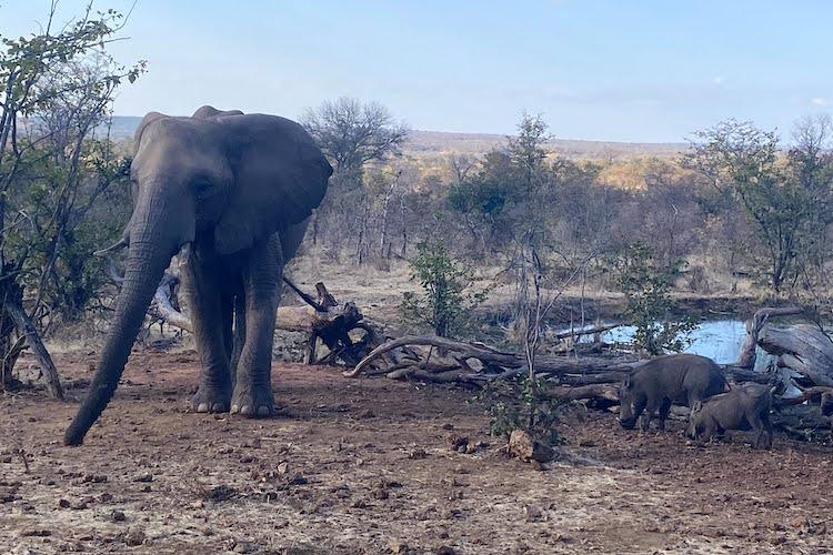 wild horizons elephant orphanage